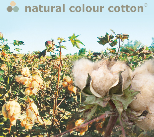 natural colour cotton field